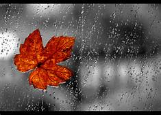 rainleaf