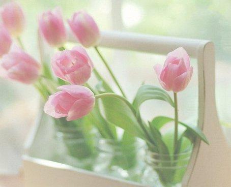 310613__pink-tulip_p